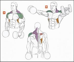 Тренировка руки плечи