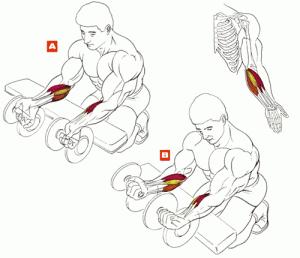 Упражнения для рук в картинках