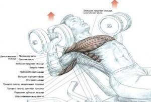 Упражнения для груди в картинках