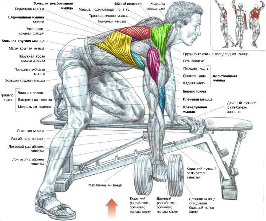 Как сделать плечи и спину