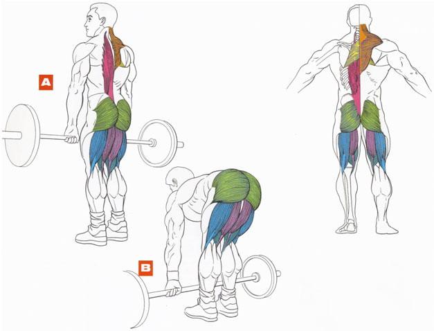 Становая тяга.  Главное в этом упражнении - не перегрузить поясницу.