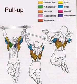 Упражнения для спины в картинках