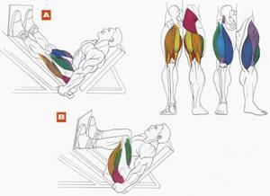 Жим ногами + видео