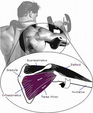 Дориан Ятс объясняет как тренировать грудь и бицепс