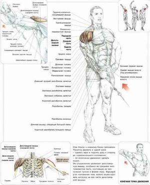 Дориан Ятс объясняет как тренировать плечи и трицепс