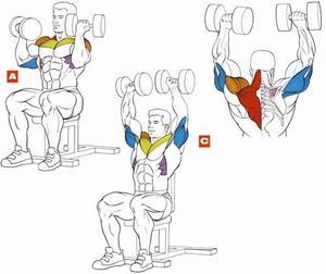Жим Арнольда - отличное упражнение для дельтовидных