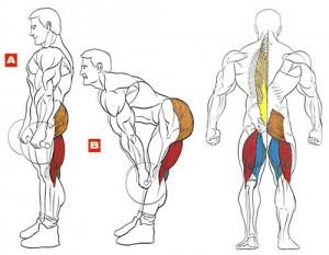 Румынская становая тяга - отличное упражнение для бицепса бедра
